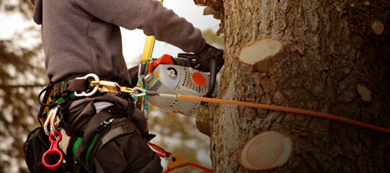 Sawhouse Com Tree Climbing Gear Arborist Supplies
